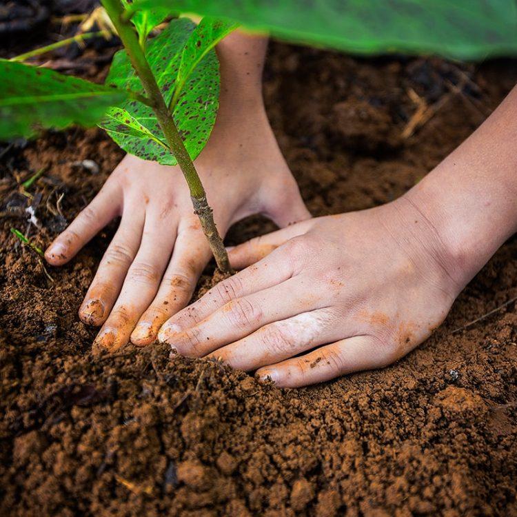 La Tigra Forest Tree Planting + Agro - Ecological Fram Visit